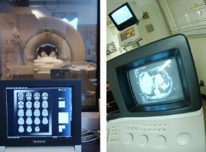 cat scan image